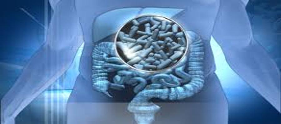 Lactobacillus Gasseri. ¿Un probiótico que ayuda a perder grasa?